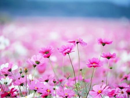Festival hoa Đà Lạt - Điểm hẹn muôn sắc hoa