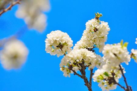 Tây Bắc rực rỡ mùa hoa xuân