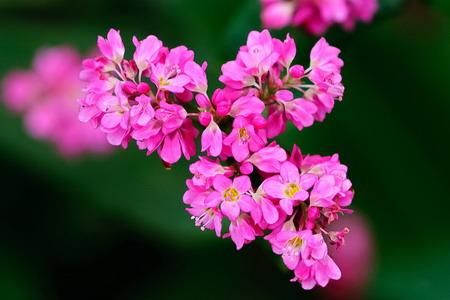 Những mùa hoa thương nhớ