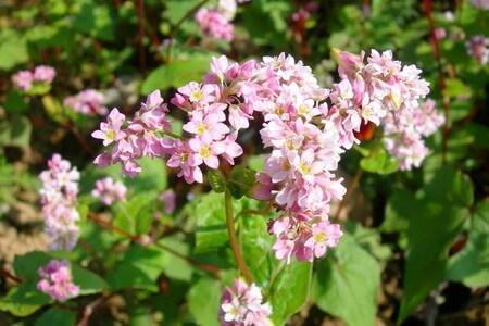 Tháng 3 - Thương nhớ những mùa hoa
