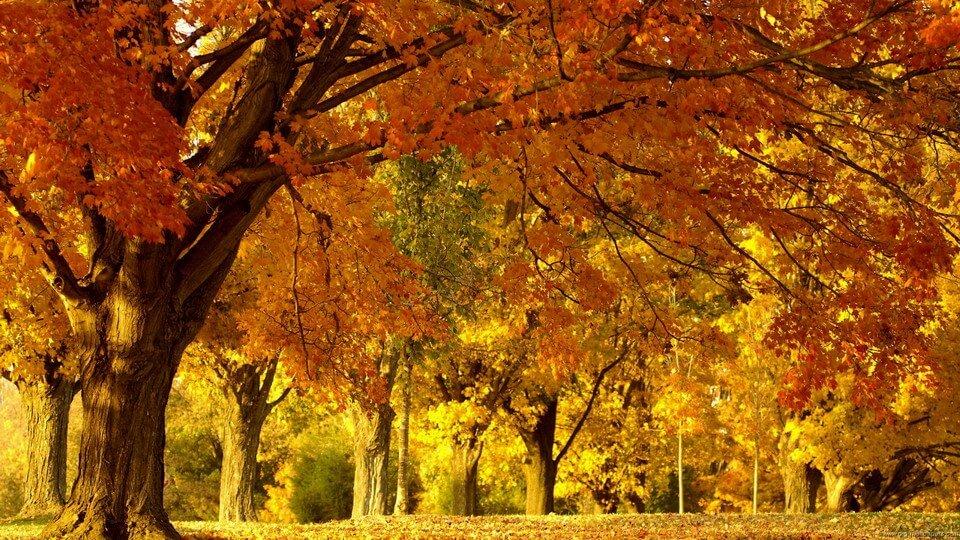 """Ngắm """"mùa thu vàng Levitan"""" trên du thuyền"""