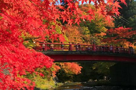 Quyến rũ mùa lá đỏ Nhật Bản