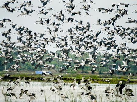 Đánh thức tiềm năng phát triển du lịch đồng bằng sông cửu long