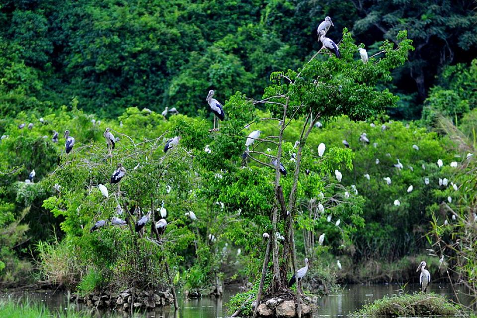 Kỳ vỹ vườn chim Thung Nham