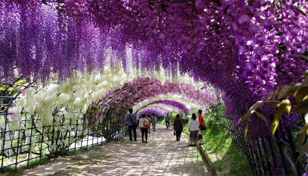 Công viên Ashikaga - Thiên đường tình ái