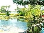 Khu sinh thái Trằm Trà Lộc