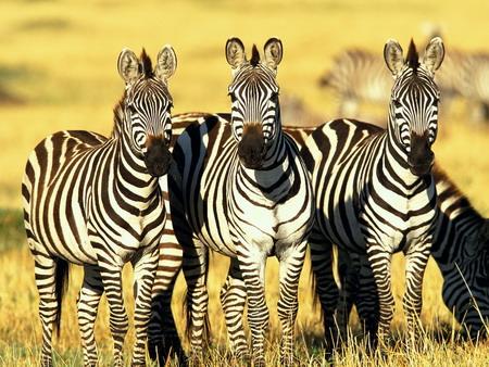 Kenya - Thiên đường động vật hoang dã